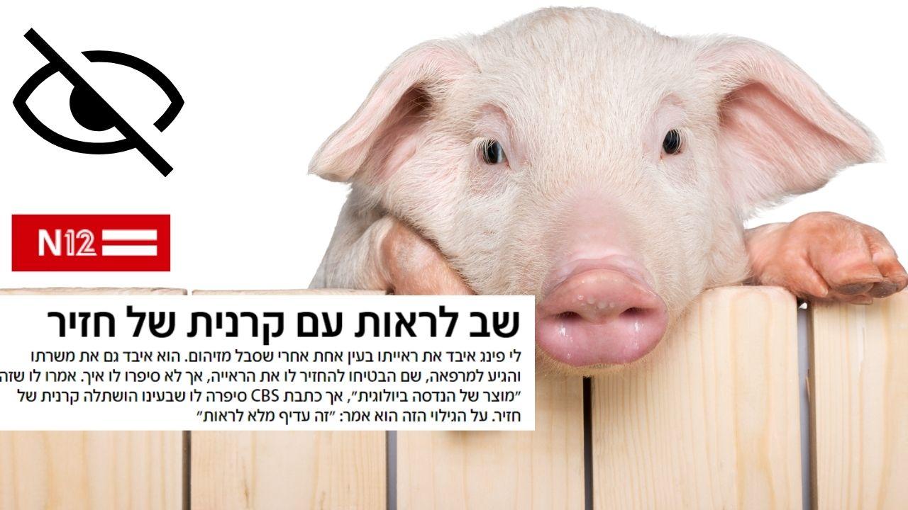 קיבוץ להב | חזירים בעולם הרפואה: חזר לראות לאחר פגיעה בקרנית | N12