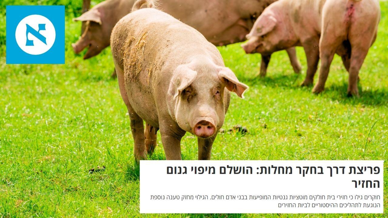 קיבוץ להב: חזירים בחקר מחלות ועולם הרפואה | הארץ