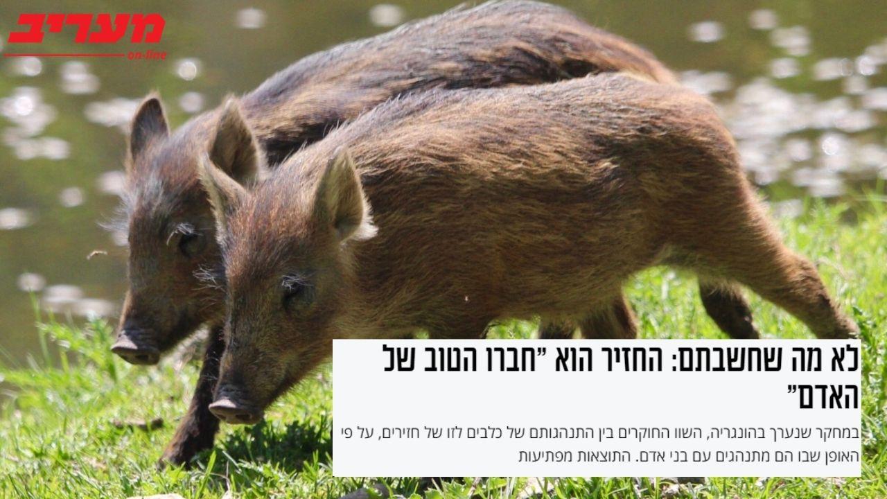 קיבוץ להב | חזירים מתחרים על תואר חברו הטוב של האדם | מעריב